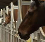 Boxes  chevaux à louer
