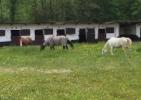 8 Boxes Chevaux sur terrain 2000M² Grez-Doiceau
