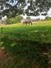 Location de boxes pour chevaux